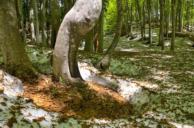 Photos: 根開けの森