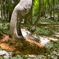 根開けの森