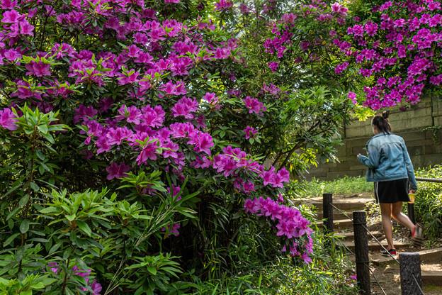 花の散歩道