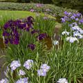 Photos: 二の丸庭園