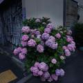 Photos: 街角に咲く