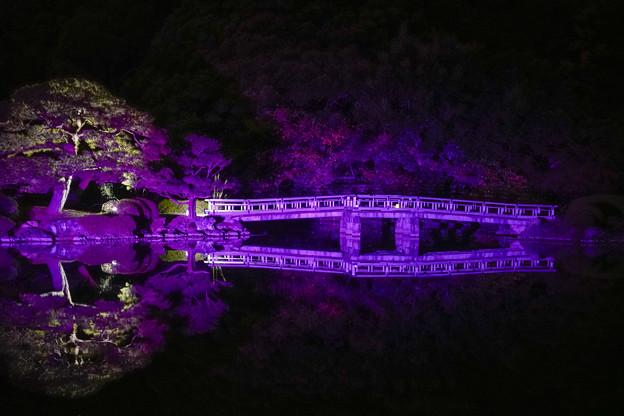 御苑ライトアップ (2)