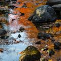 Photos: 水面の彩