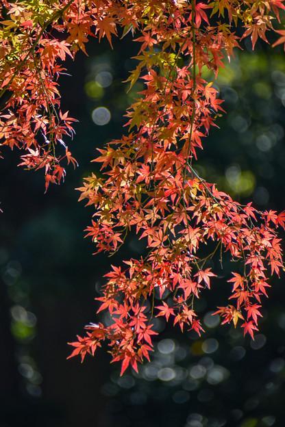 小石川後楽園 (2)