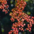 Photos: 小石川後楽園 (2)