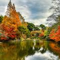 Photos: 新宿御苑下の池 12月8日