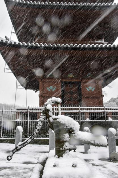 雪の本門寺2018-1-22