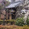 Photos: 池上梅園 (3)