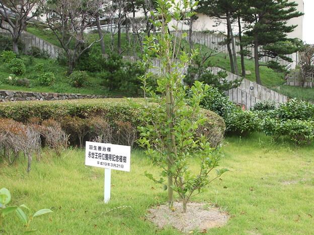 写真: 永世王将記念樹の半年後2007/9/8
