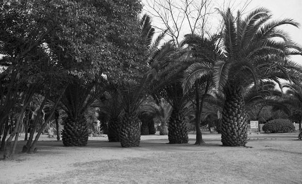 昭和53年 ザビエル公園