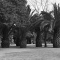 写真: 昭和53年 ザビエル公園