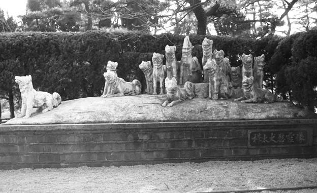 写真: S53 樺太犬慰霊像