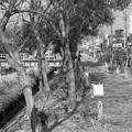 写真: S53 旧大浜線沿線風景2