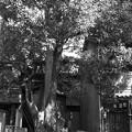 Photos: 天下茶屋跡