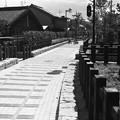 Photos: 南海平野線跡の遊歩道