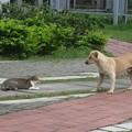 Photos: 猫VS犬