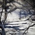 写真: 冬の瞬き