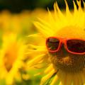 写真: 夏の人気者