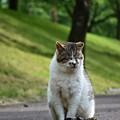 Photos: 野良ちゃん