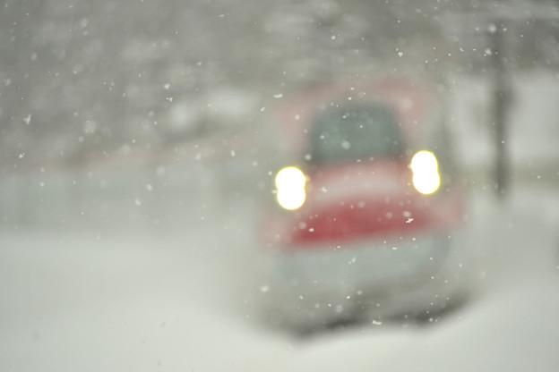 写真: 雪の妖精