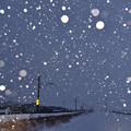 写真: 雪,降り積む