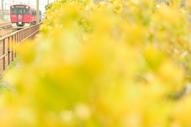 Photos: 春の色