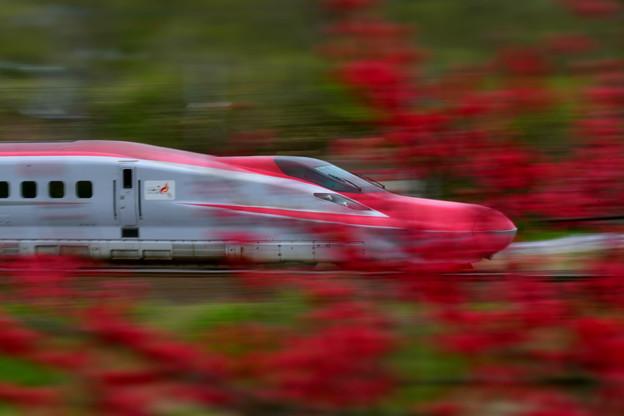 紅い花を流す