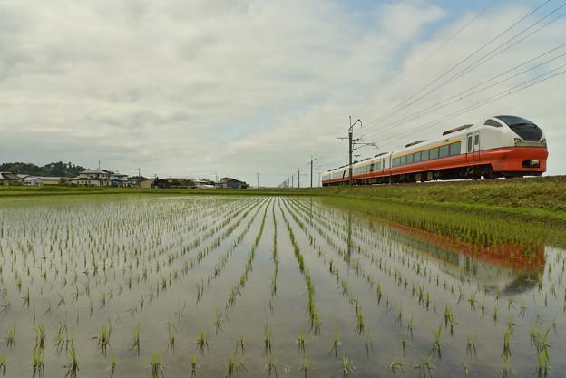 写真: 田植えも終わり3