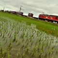 写真: 豊作を願う2