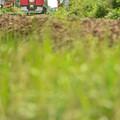 写真: 草いきれ
