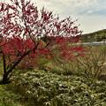 Photos: 紅い花