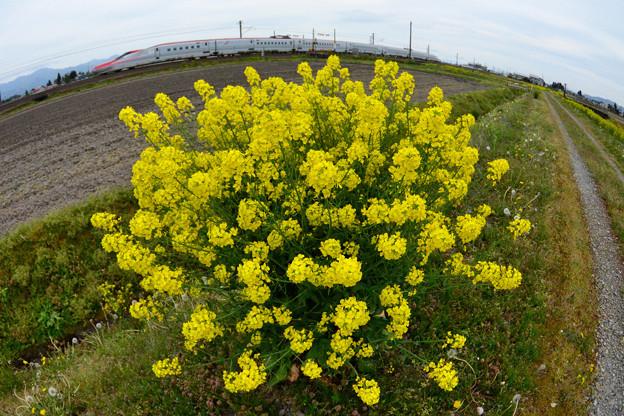 Photos: 黄色の花束