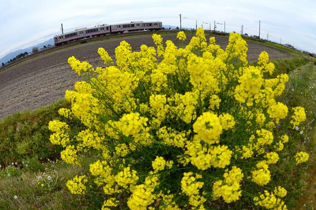 黄色の花束2