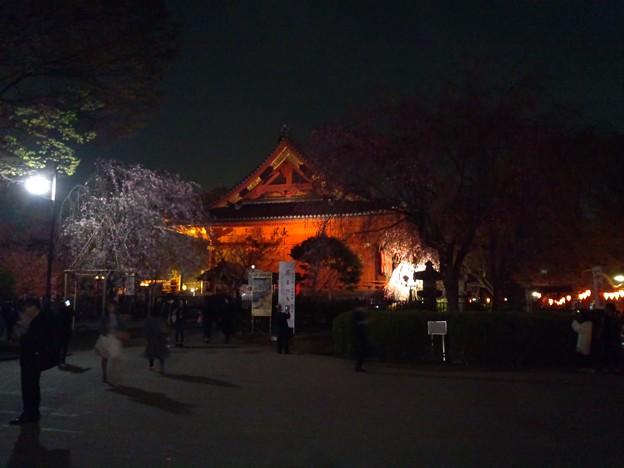 枝垂れ桜と寛永寺。