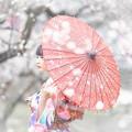 Photos: 梅散る里