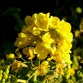 写真: 大寒に咲く