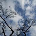 Photos: 空と