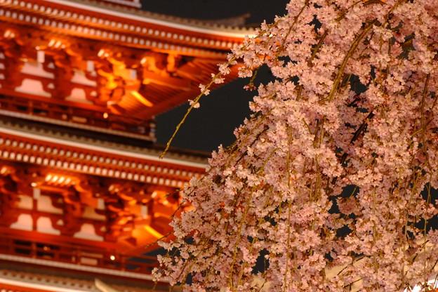浅草寺の夜桜6