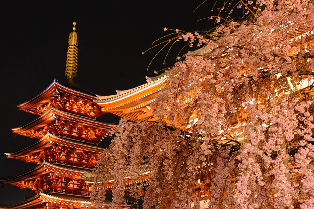 浅草寺の夜桜8