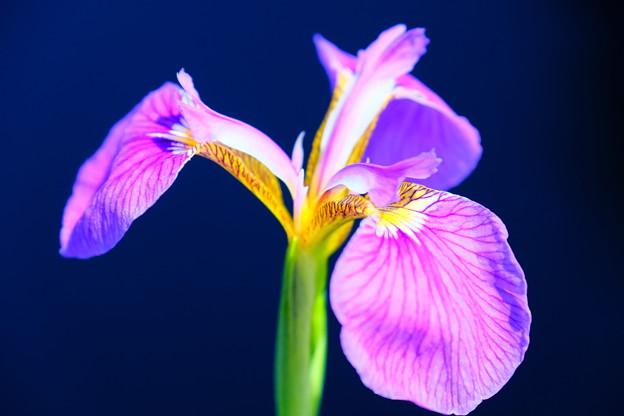 湿原に咲く花1