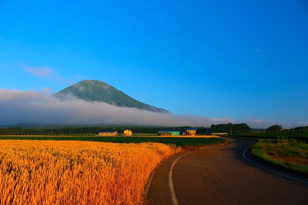 麦畑と朝霧の中の羊蹄山