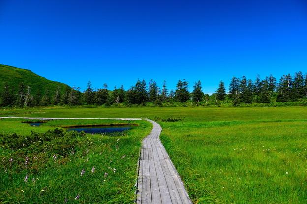 神仙沼湿原の夏 その4