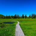 写真: 神仙沼湿原の夏 その4