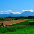 写真: 美瑛 新栄の丘