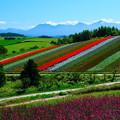 写真: 美瑛 四季彩の丘その1