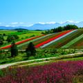 写真: 美瑛 四季彩の丘その2