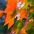 写真: 雨上がりの紅葉