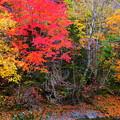 写真: 紅葉と渓流