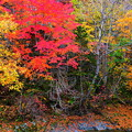 Photos: 紅葉と渓流