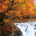 写真: 紅葉に染まる三階滝
